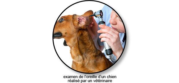 examen-oreille-chien-otite-otoscope