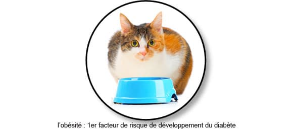 facteur-risque-diabete-chat-obese-obesite