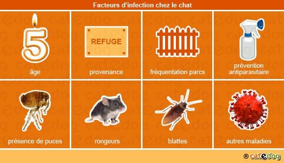 facteurs_infection_chat