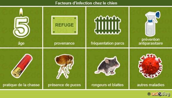 facteurs_infection_chien