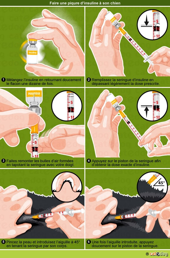 faire-piqure-insuline-diabete-chien-diabetique