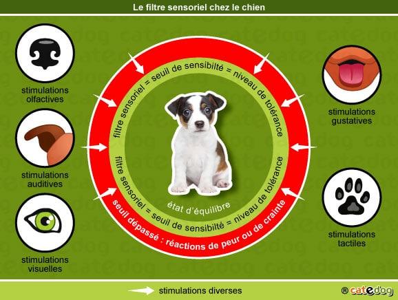 filtre-sensoriel-adoption-comportement-chiot