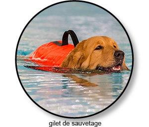 Gilet de sauvetage pour le chien souffrant d'arthrose