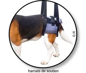 Harnais de soutien pour l'arthrose du chien