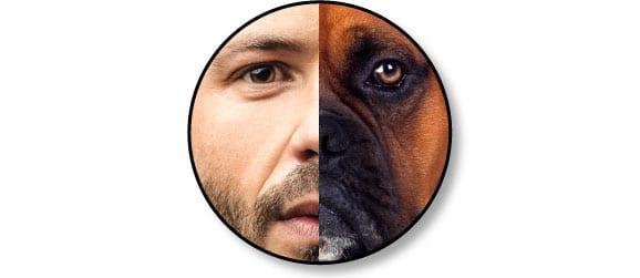 hierarchie_homme_chien