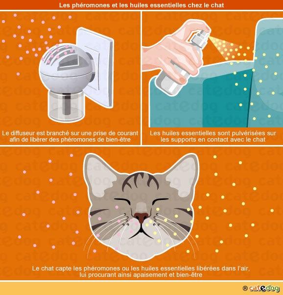 Huiles essentielles Petscool et phéromone Feliway pour le chat anxieux