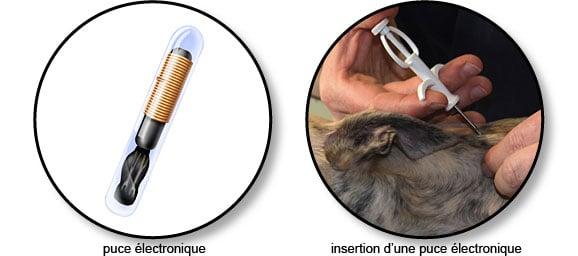 identification_puce_electronique_chien