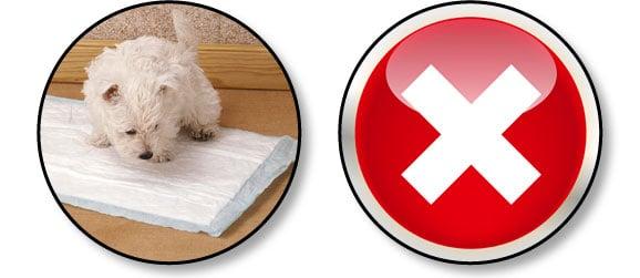 installer-un-tapis-de-proprete-chiot
