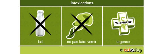 intoxications2-chien
