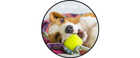 Jouet balle à mastiquer pour le chien
