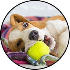 jouet balle pour chien qui fait des bêtises