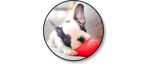 jouet-jeu-chien-chiot