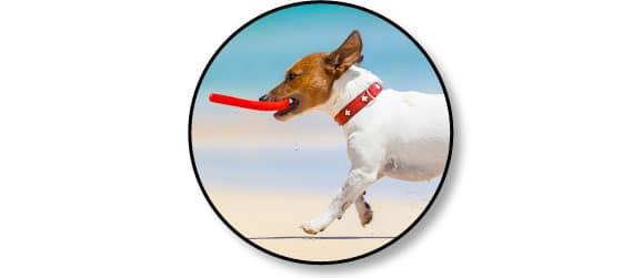 jouet-jouer-frisbee-jeu-chien-chiot