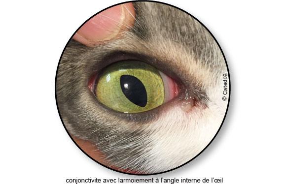 maladie-traitement-traiter-conjonctivite-oeil-chat