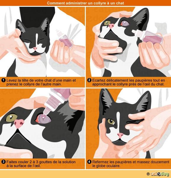 Mettre un collyre dans l'œil d'un chat avec une uvéite