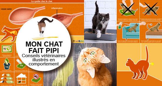 Mon chat fait pipi partout – Conseils vétérinaires