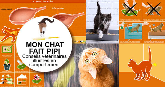 mon chat fait pipi partout conseils v t rinaires illustr s catedog. Black Bedroom Furniture Sets. Home Design Ideas