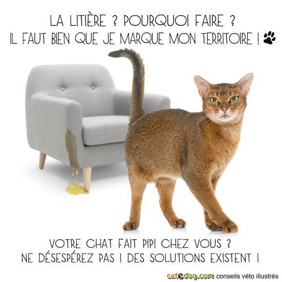 mon-chat-fait-pipi-partout-pisse-urine