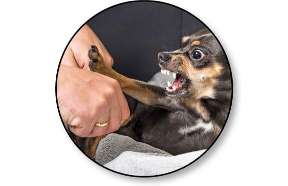 Mon chien est agressif et me mord