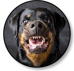 Mon chien est agressif