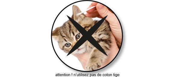 nettoyer-oreille-chat-chaton-coton-tige