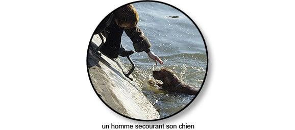 noyade_chien