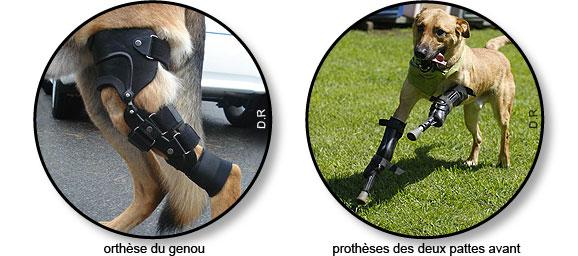 orthèse et prothèse du chien souffrant d'arthrose