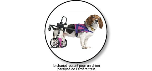 paralysie_chien