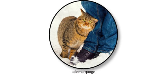 phéromones-allomarquage-chat