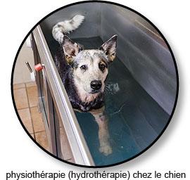 Physiothérapie et hydrothérapie chez le chien souffrant d'athrose