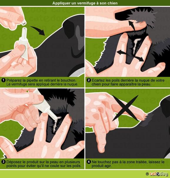 pipette-appliquer-vermifuge-vermifuger-chien