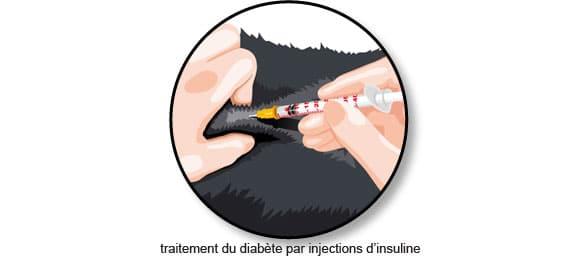 piqure-insuline-diabete-chat-chien
