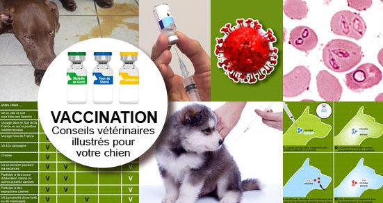Vaccin Chiot Calendrier.Vaccin Vaccination Du Chien Et Du Chiot Conseil Veto
