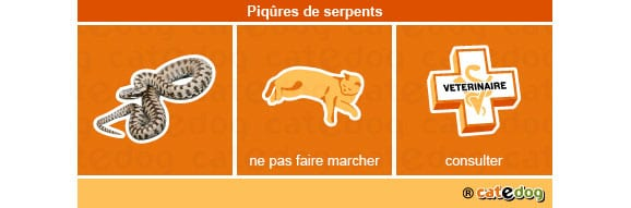piqures_serpents_chat