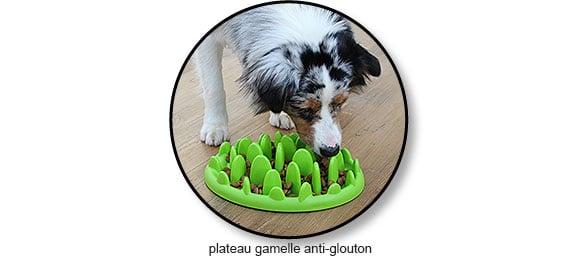 Plateau gamelle interactive anti-glouton pour le chien
