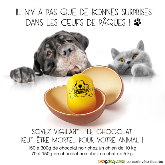 poison-toxique-chocolat-chien-chat