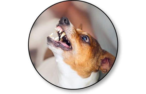 Pourquoi mon chien est agressif