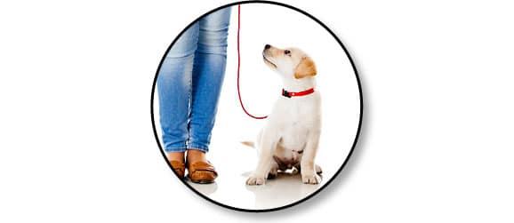 promenade_marche au pied_chien