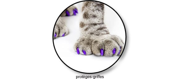 proteges-griffes-chat