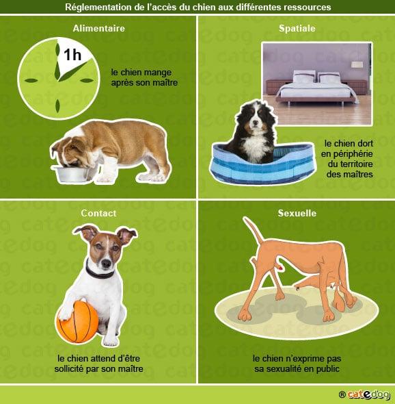 puberte_reglementation_acces_chien