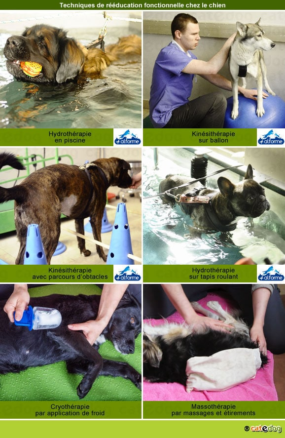 reeducation-fonctionnelle-chien-hydrotherapie-kinesitherapie-physiotherapie-massage