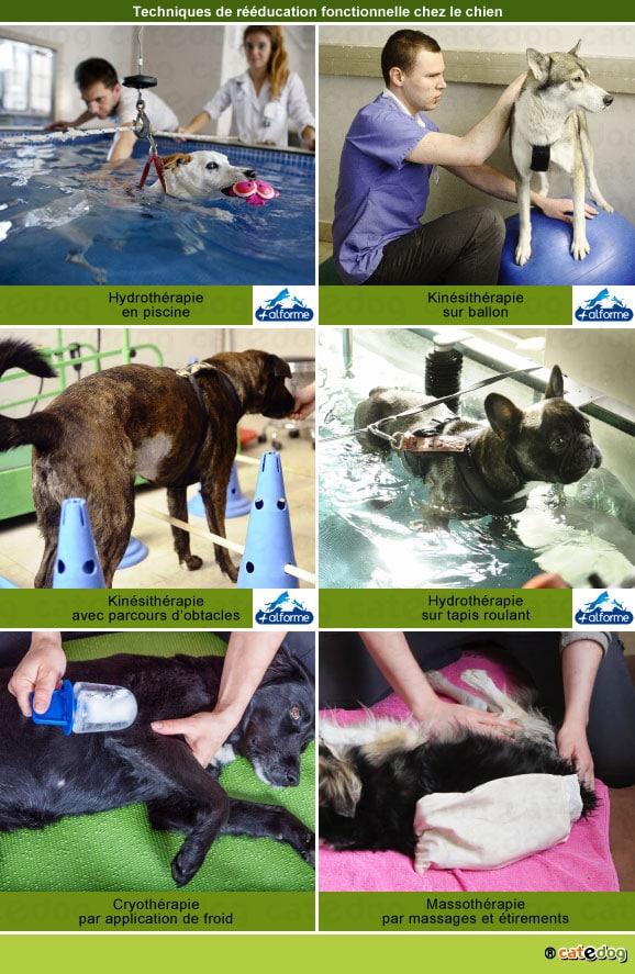 reeducation-fonctionnelle-chien-hydrotherapie-kinesitherapie-physiotherapie-massage