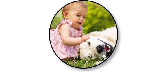 risques_enfant_chien