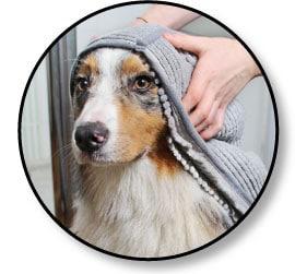 serviette microfibre et bain du chien