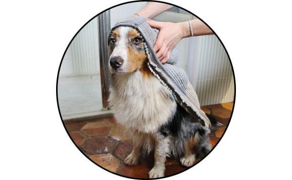 Serviette microfibre pour le bain et sécher le chien