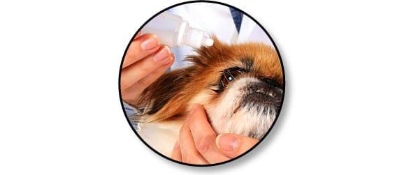 nettoyer-soigner-yeux-chien