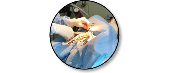 sterilisation-chirurgie-chienne