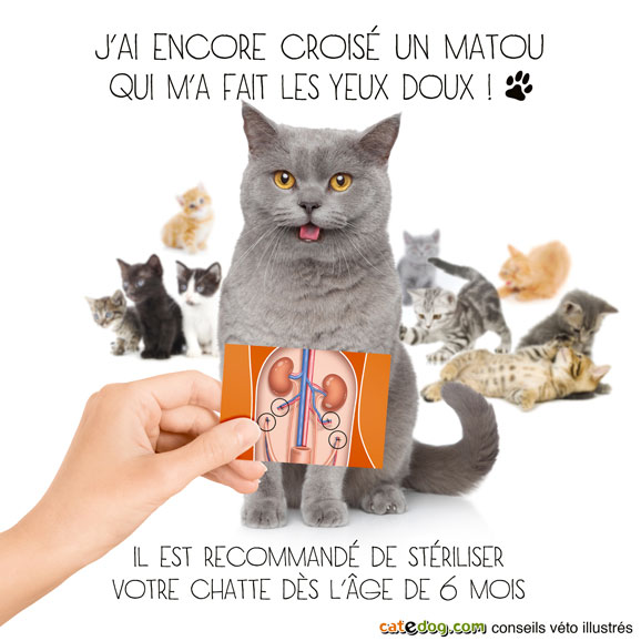 grosse chatte grosse chatte tube enony
