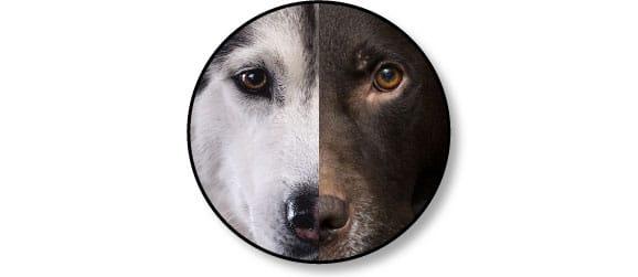 trouble_communication_entre_chiens