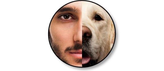 trouble_communication_homme_chien